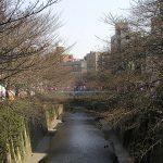 目黒川の桜 2007 #1