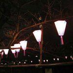 目黒川の桜 2007 #2