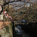 目黒川の桜 2009 #3