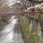 目黒川の桜 2009 #4