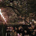 目黒川の桜 2009 #6