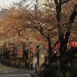目黒川の桜 2009 #7