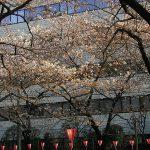 目黒川の桜 2009 #8