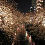 目黒川の桜 2009 #10