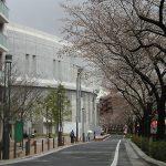 目黒川の桜 2010 #3