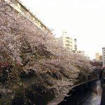 目黒川の桜 2010 #11