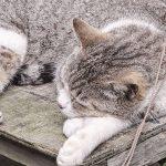 江の島の猫達:2012年春