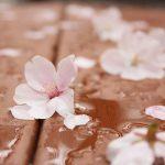 目黒川の桜 2013 #08:雨の中を