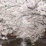 目黒川の桜 2013 #20:YouTube まとめ