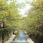 目黒川の桜 2013 #18:新緑
