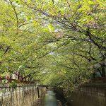 目黒川の桜 2013 #19:そして、ぼんぼりも片付けられて