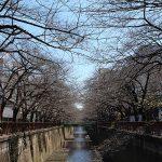 目黒川の桜 2014 #02:モクレンは満開