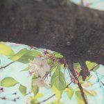 目黒川の桜 2014 #13:新緑宣言!