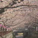 目黒川の桜 2015 #03:ちょっと散歩