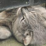 江の島の猫達:2015年春