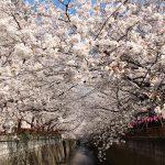 目黒川の桜 2017