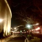 目黒川の桜 2017 #03:誰もいない