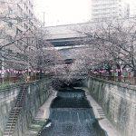 目黒川の桜 2017 #05:五分咲きでもない?