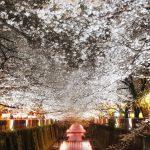 目黒川の桜 2017 #08:夜桜散歩