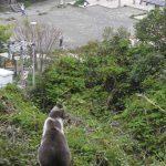 江の島の猫達・2007年春