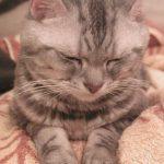 愛猫Panの誕生日