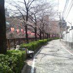 目黒川の桜 2008 #1