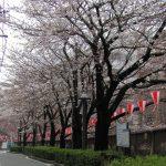 目黒川の桜 2008 #2