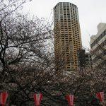目黒川の桜 2010 #5