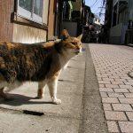 江の島の猫達・2010年春