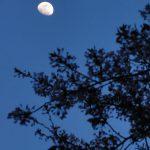 目黒川の桜 2011 #7
