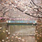 目黒川の桜 2018 #02:川霧