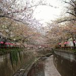 目黒川の桜 2018 #08:見納めです