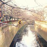 目黒川の桜 2019 #01:今年もお届け