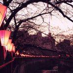 目黒川の桜 2019 #04:三分咲き