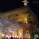 目黒川の桜 2019 #08:夜桜