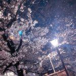 目黒川の桜 2020 #06:街灯で夜桜