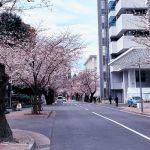 目黒川の桜 2020 #07:番外編