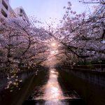 目黒川の桜 2020 #15:朝陽の中で – Movie