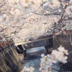 目黒川の桜 2021 #05:今と昔