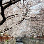 目黒川の桜 2021 #02:五分咲き
